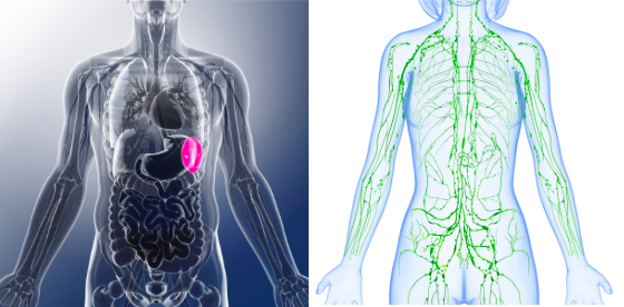 ¿Cómo fortalecer tu inmunidad?  Métodos naturales que incluyen ...