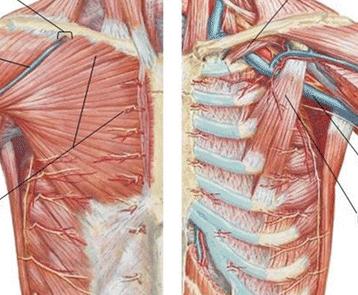 Précordialgie : comprendre cette douleur thoracique - REFLEX ...